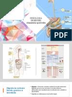 7.Fiziologia digestiei; Alimentatia sportivului