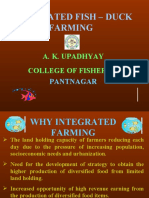 NEW DUCK FISH FARMING