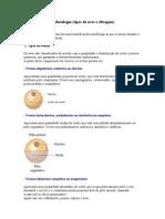 Embriologia_Tipos de Ovos e Clivagem