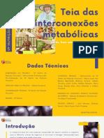 teia_das_interconexoes_metabolicas_nutricao_funcional