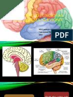 Desarrollo Funcional Del Sistema Nervioso