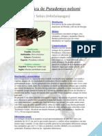 Ficha Pseudemys nelsoni (InfoGalapagos)