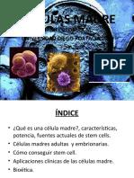 Celula Madre y ciclo celular