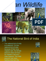 Wade_-_Indian_Wildlife