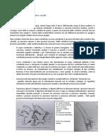 Osteologia scheletro assile