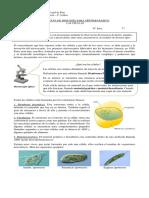 BIOLOGIA 7BASICO GUIA DE CELULA  SEMANA  2
