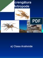 lectie_15_artropode_arahnide_si_crustaceae