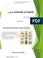 Clasa Arahnide și Insecte