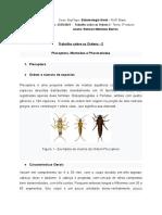 Entomologia Geral - Trabalho sobre as Ordens 2 (1)