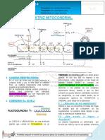 04 b 28-05-19 Matriz Mitocondrial