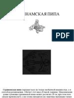 СУРИНАМСКАЯ ПИПА