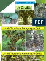 Manejo Integrado Lulo PDF Leandro Chacin