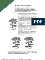 Regras basicas para bonsai