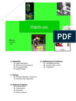 Shigella spp.