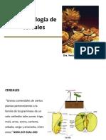 Microbiologia de Los Cereales