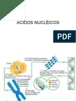 Introdução aos Ácidos nucléicos