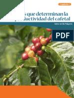 3. Factores Que Determinan Productividad Cafetal