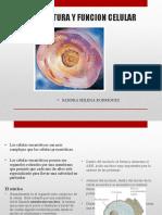 2.2.Estructura y función celular