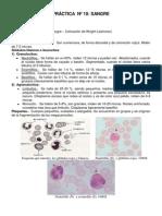 Guía de práctica de Histología