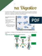 Entomologia Básica - Sistema Digestivo