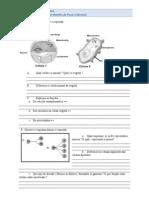 Células e Funções do Corpo