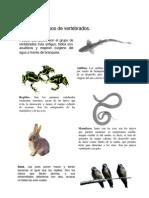 grupo de mamiferos