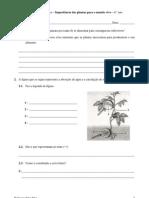 Importância das plantas para o mundo vivo - Ficha de CN - 6.º ano