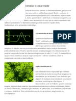4 fenômenos fundamentais da neurofisiologia