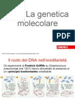 duplicazione-DNA-sintesi-proteica
