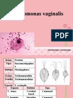 Thrichomonas vaginalis