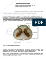 3. Neuroanatomia_veterinaria_continuacion