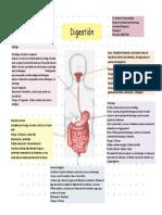 Actividad 10 digestion