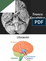 clase anatomia Tronco Encefalico Mod