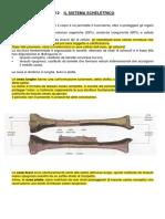 1 sistema scheletrico