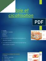 Plai Et Cicatrisation