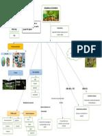 mapa mental desarrollo economico