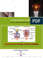 Aula Sistema Genital  Feminino e Endócrino