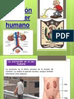 la-excrecin-en-el-ser-humano-160914034312