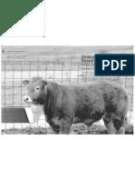 Dialnet-SindromeRespiratorioBovino-7147599