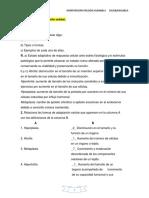 Consolidacion pato I Tema 3