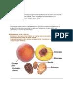 Frutos de hueso DEF2