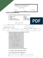 Ficha de Trabalho - Sistema Nervoso