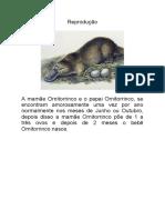 Reprodução_Ornitorrinco