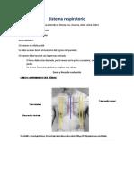 Sistema respiratorio semiología