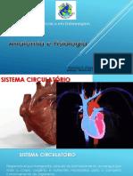 Sistema cardiovascular 6_compressed(1)
