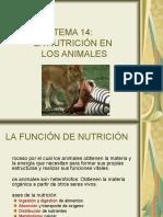 Nutricion Animales