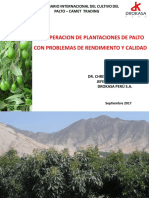 Recuperación Plantaciones de Palto
