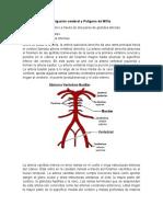 informe de anatomía-irrigación cerebral y polígono de willis