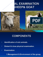 CILINICAL EXAMINATION OF SHEEP& GOAT