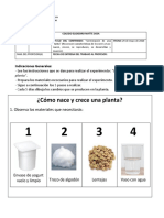 ACTIVIDADES CIENCIAS GERMINACION DE UNA PLANTA